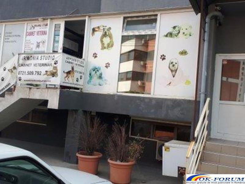 Armonia Studio - Cabinet Veterinar servicii medicale - 7